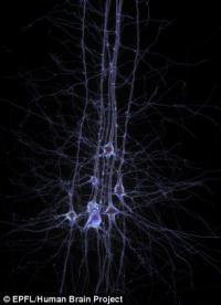 Недосыпание может повредить мозг