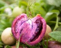 Фиолетовые помидоры помогут в борьбе с раком