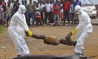 Кровь выживших после Эболы – источник для вакцины?