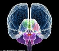 Американский ученый утверждает, что нашел причину развития аутизма