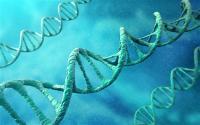 Генетики помогут победить онкологию