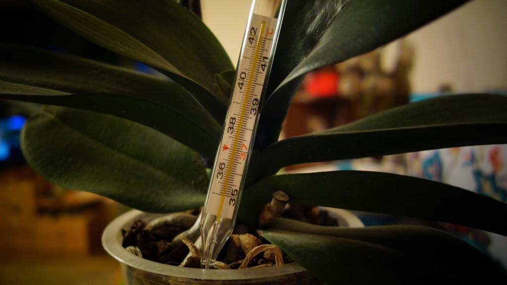 Что означает повышение температуры тела при гайморите?