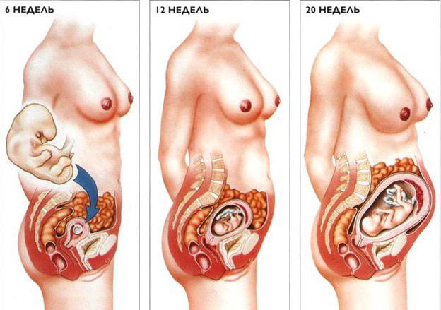 Весь секс позы с беремеными