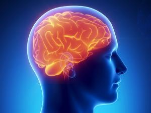 Структура мозга влияет на способность регулирования эмоциями
