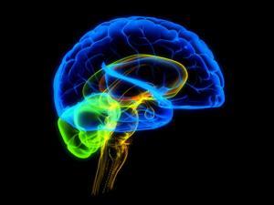 Высокий интеллект в раннем детстве вызывает психические расстройства в будущем