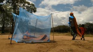 Малярия снова угрожает Африке