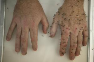 Как защититься от комариных укусов?