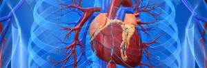 Нарушение функции сердечно-сосудистой системы при отравлениях