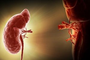 Новая процедура позволит производить трансплантацию почки от любого донора