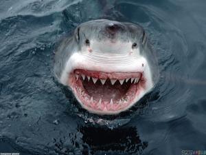 Как акулы могут помочь регенерации человеческих зубов