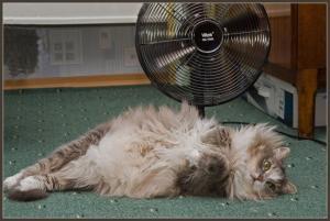 Как заснуть, когда за окном жара?