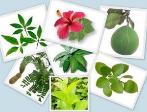 Зачем многие люди стараются в своём доме выращивать комнатные растения