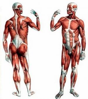 Происхождение нарушения координации сокращений мышечных волокон