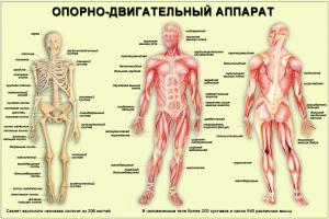 Диагностика костно-мышечных нарушений