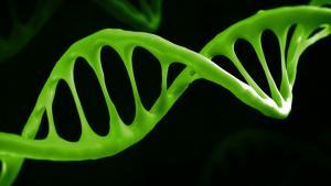 Новые доказательства в пользу гипотезы мира РНК?