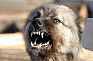 Болезни, которыми человек может заразиться от собак и кошек