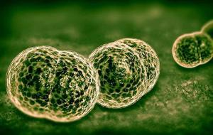 5 признаков менингита, о которых стоит знать