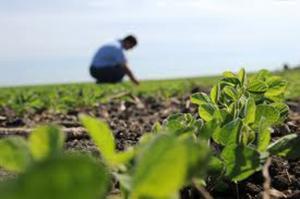 Инструкция по охране труда при выполнении ручных работ в растеневодстве: Общие положения