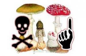 Отравление ядовитыми грибами