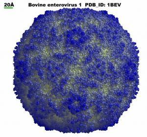 Энтеровирус