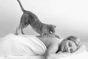 В Японии массаж спины в спа-салоне делает кошка