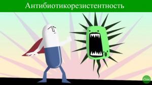 ВОЗ запрещает антибиотики для животных?