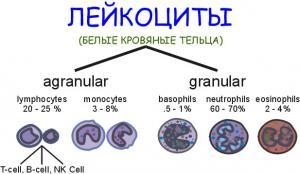 Лейкоциты в крови: норма и отклонения