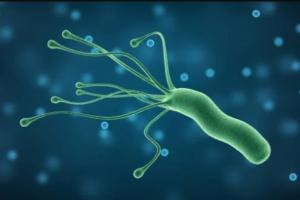 Helicobacter Pylori (хеликобактер пилори)