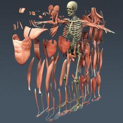 Нарушения функционирования костно-мышечной системы