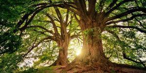 Удивительный мир: как деревья влияют на человека
