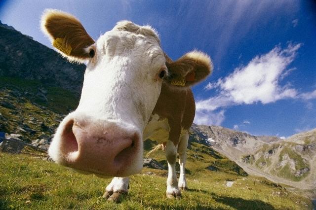 6 распространенных мифов о молоке
