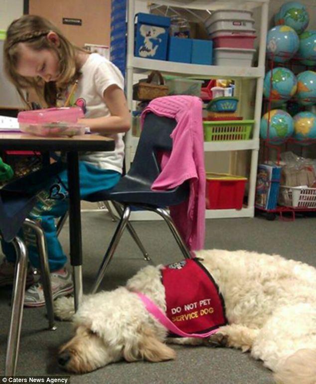 Школьница И Собакой