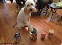 Дружба с собакой спасла девочке жизнь