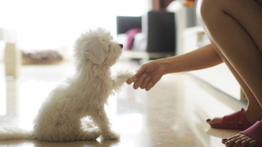 Ученые доказали: собаки схожи с хозяевами