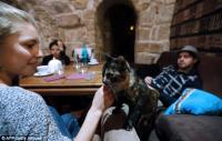 Француженка открыла «лечебное» кафе с котиками