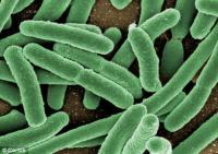 Кишечные бактерии провоцируют сердечный приступ