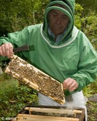 Аллергия на пчелиный яд – опасная и непредсказуемая