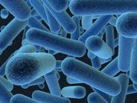 Микробиология желудочно-кишечного тракта