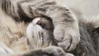 Глаза сухопутных млекопитающих покрыты трехслойной слезной пленкой
