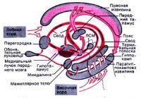 Физиология среднего мозга